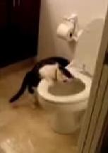 flushingcat.jpg