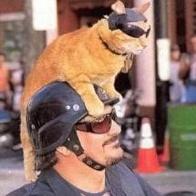 catmotorcycle1.jpg