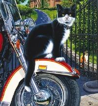catmotorcycle2.jpg